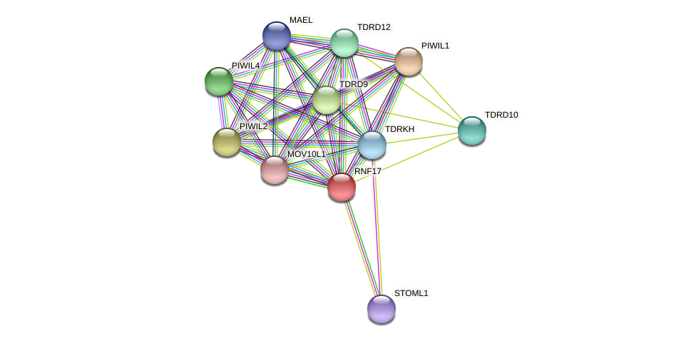 RNF17 protein (Latimeria chalumnae) - STRING interaction network