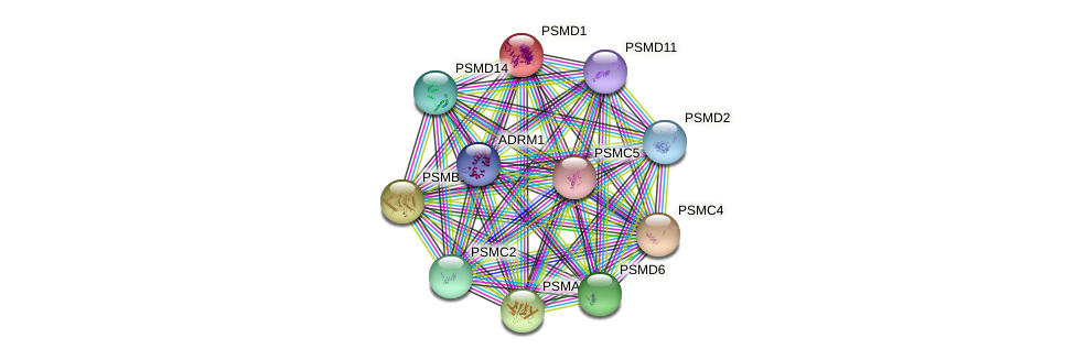 PSMD1 protein (Latimeria chalumnae) - STRING interaction network
