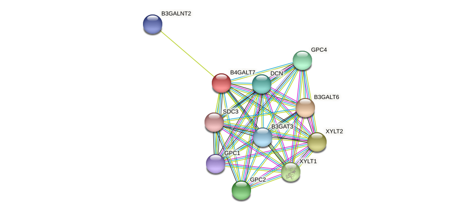 B4GALT7 protein (Latimeria chalumnae) - STRING interaction network