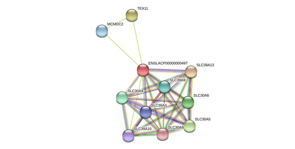 SLC39A4 protein (Latimeria chalumnae) - STRING interaction network