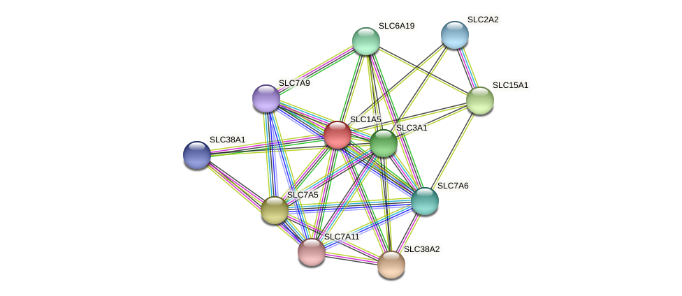 SLC1A5 protein (Latimeria chalumnae) - STRING interaction network