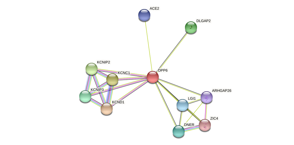 DPP6 protein (Latimeria chalumnae) - STRING interaction network
