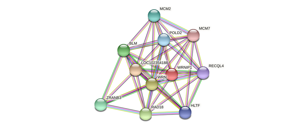 ENSLACG00000000498 protein (Latimeria chalumnae) - STRING interaction network