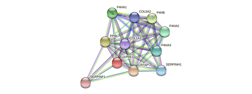 LEPRE1 protein (Latimeria chalumnae) - STRING interaction network