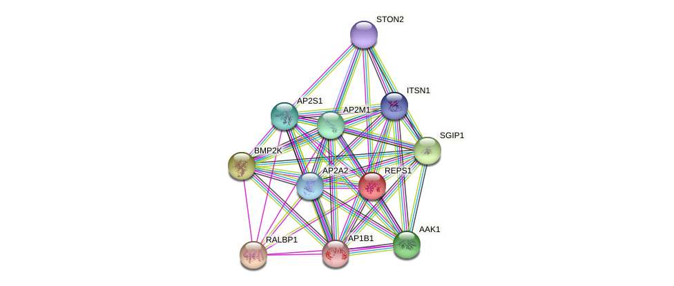 REPS1 protein (Latimeria chalumnae) - STRING interaction network
