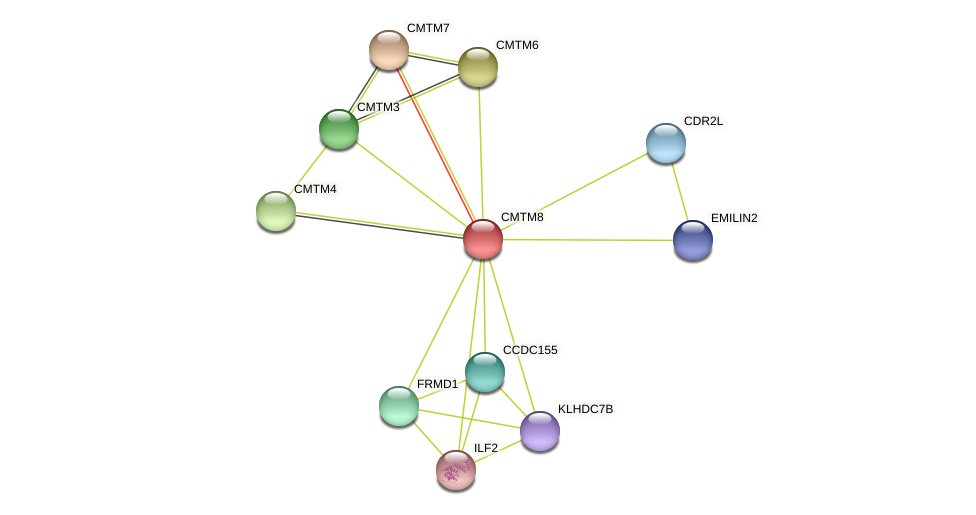 CMTM8 protein (Latimeria chalumnae) - STRING interaction network