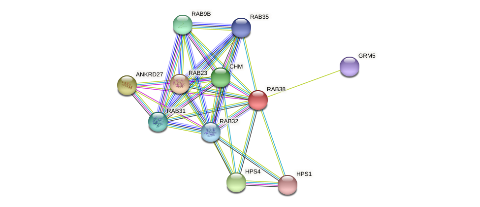 RAB38 protein (Latimeria chalumnae) - STRING interaction network