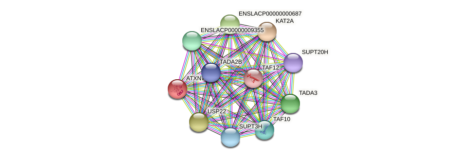 ATXN7 protein (Latimeria chalumnae) - STRING interaction network