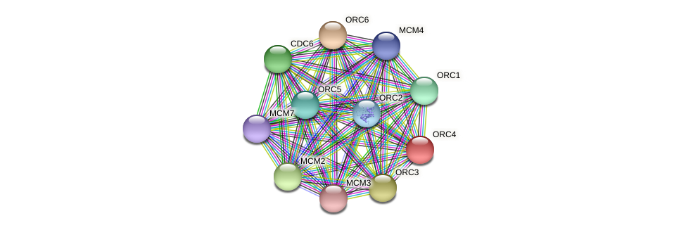 ORC4 protein (Latimeria chalumnae) - STRING interaction network
