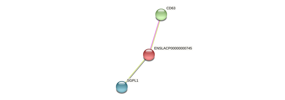 SLC29A2 protein (Latimeria chalumnae) - STRING interaction network