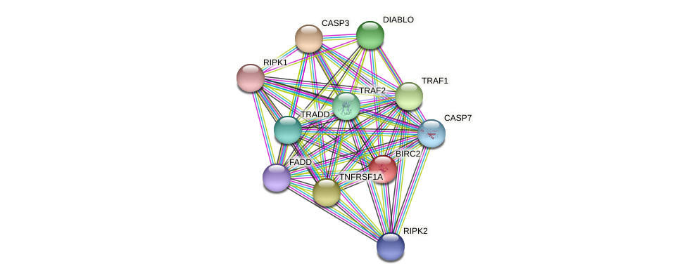 BIRC2 protein (Latimeria chalumnae) - STRING interaction network