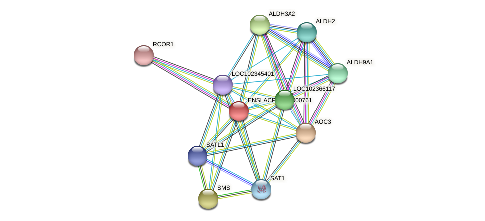 ENSLACG00000000683 protein (Latimeria chalumnae) - STRING interaction network