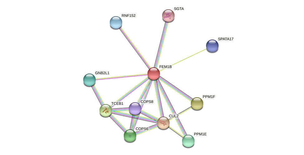 FEM1B protein (Latimeria chalumnae) - STRING interaction network