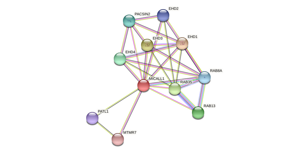 MICALL1 protein (Latimeria chalumnae) - STRING interaction network