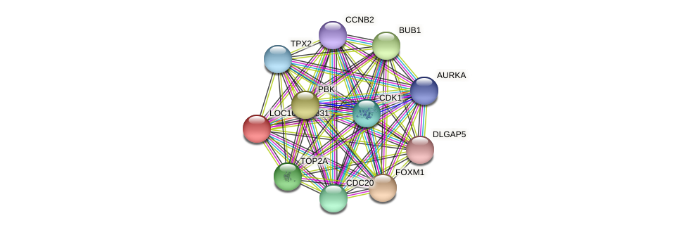 ENSLACG00000000767 protein (Latimeria chalumnae) - STRING interaction network