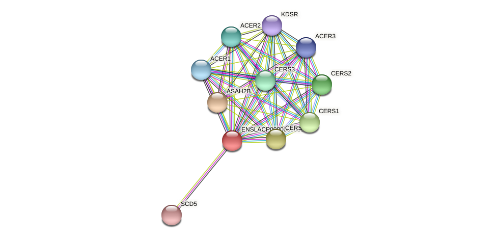 FA2H protein (Latimeria chalumnae) - STRING interaction network