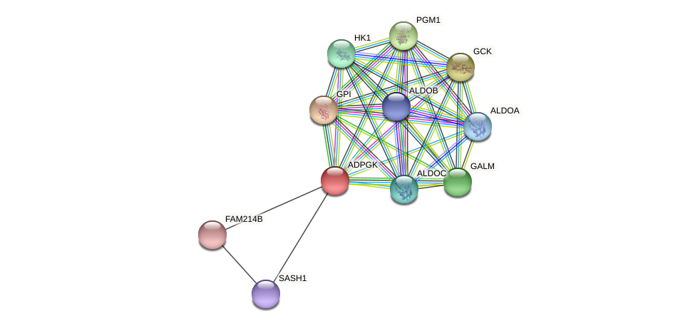 ADPGK protein (Latimeria chalumnae) - STRING interaction network