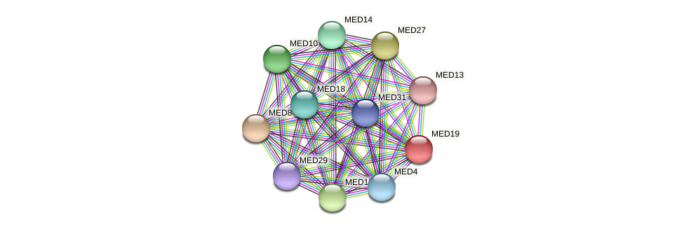 MED19 protein (Latimeria chalumnae) - STRING interaction network