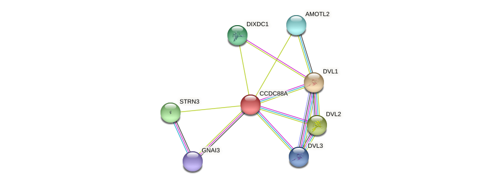 CCDC88A protein (Latimeria chalumnae) - STRING interaction network