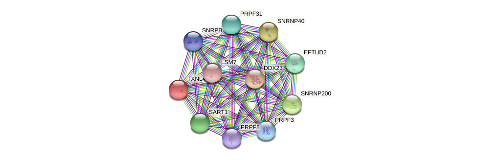 TXNL4A protein (Latimeria chalumnae) - STRING interaction network