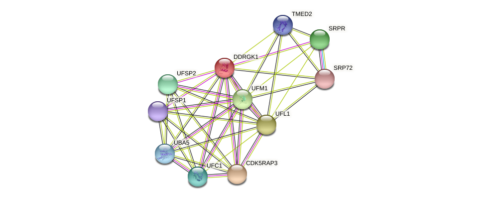 DDRGK1 protein (Latimeria chalumnae) - STRING interaction network