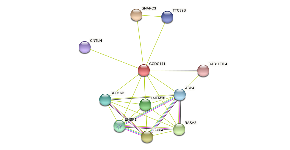 CCDC171 protein (Latimeria chalumnae) - STRING interaction network