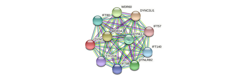 DYNC2H1 protein (Latimeria chalumnae) - STRING interaction network