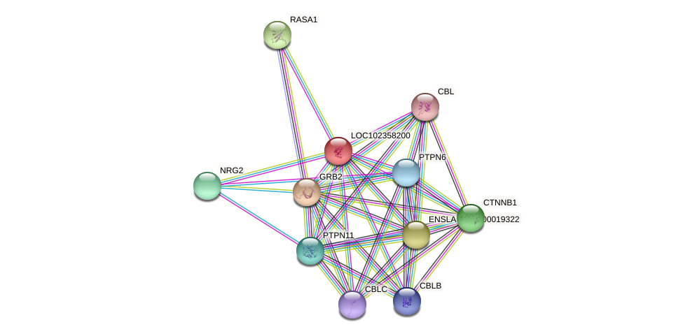 ENSLACG00000001012 protein (Latimeria chalumnae) - STRING interaction network