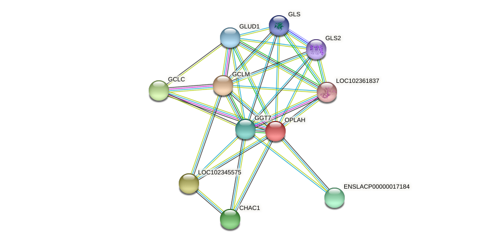 OPLAH protein (Latimeria chalumnae) - STRING interaction network