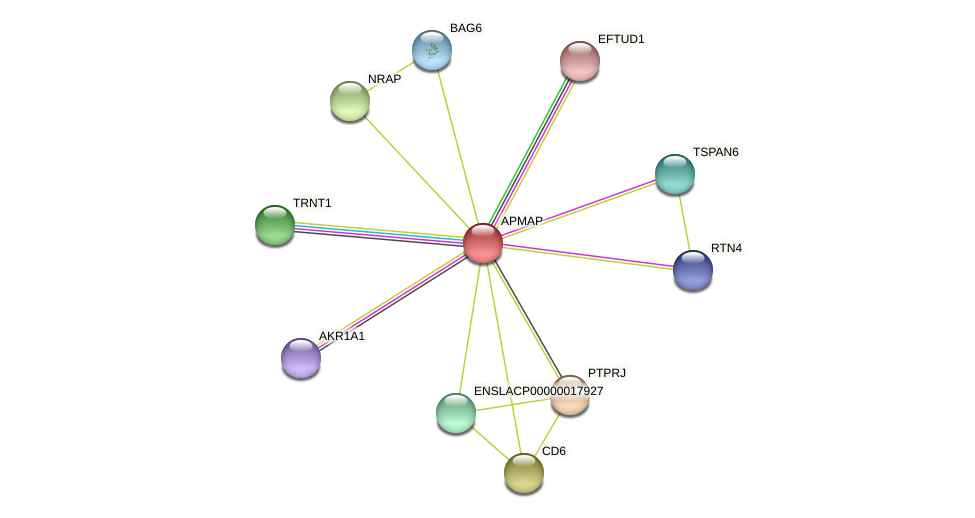APMAP protein (Latimeria chalumnae) - STRING interaction network