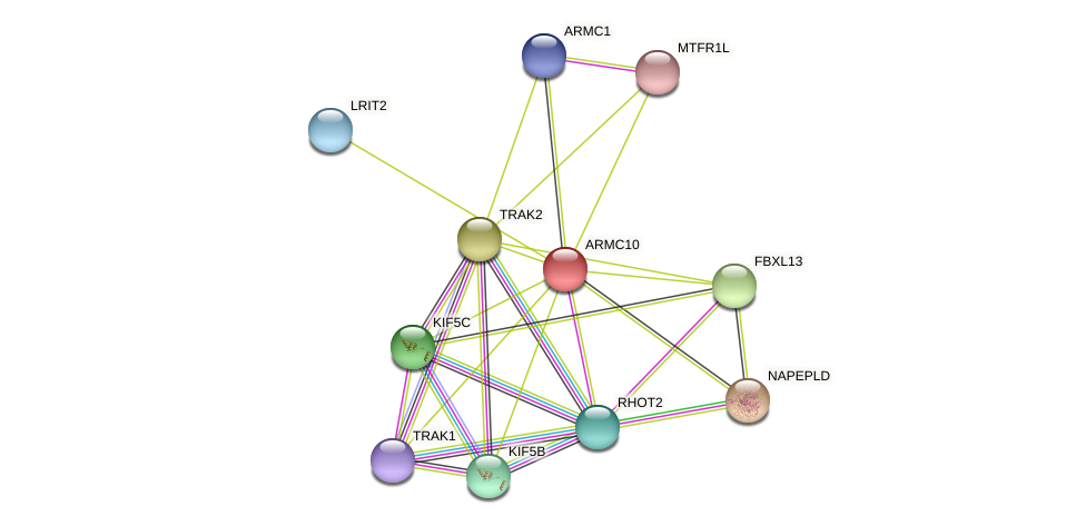 ARMC10 protein (Latimeria chalumnae) - STRING interaction network