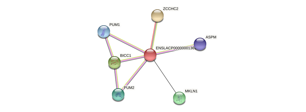 ZCCHC2 protein (Latimeria chalumnae) - STRING interaction network