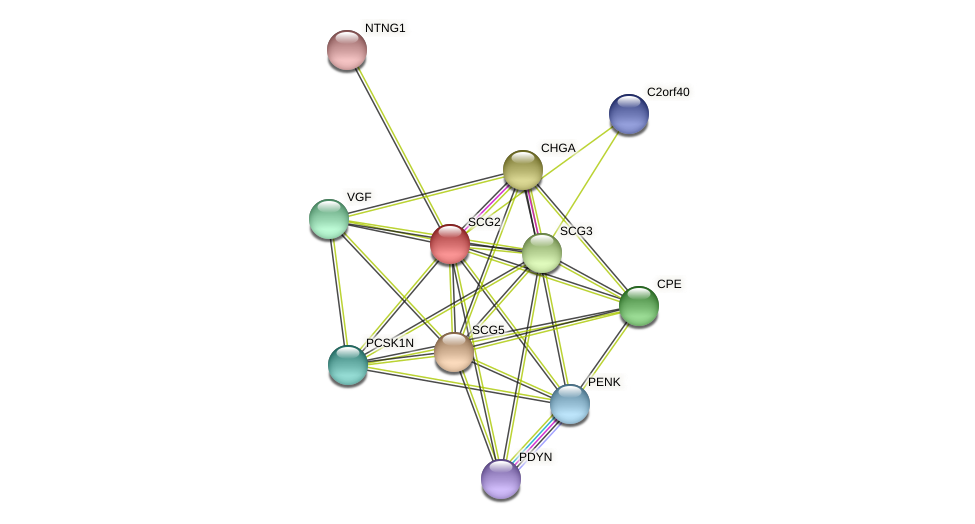 SCG2 protein (Latimeria chalumnae) - STRING interaction network