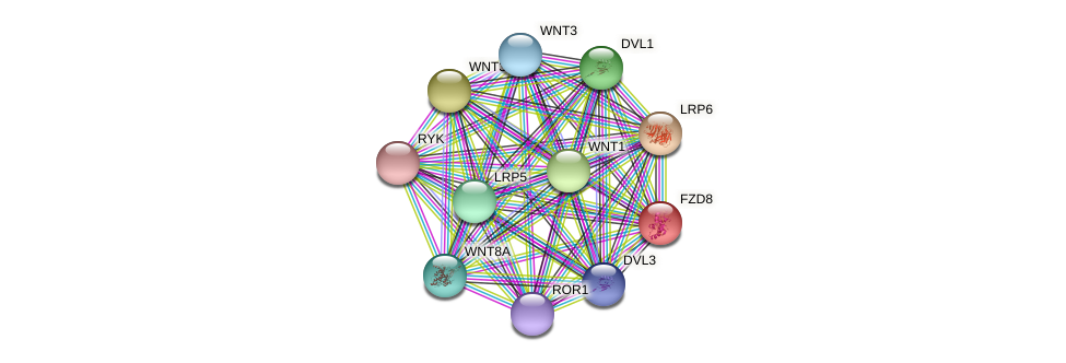 FZD8 protein (Latimeria chalumnae) - STRING interaction network