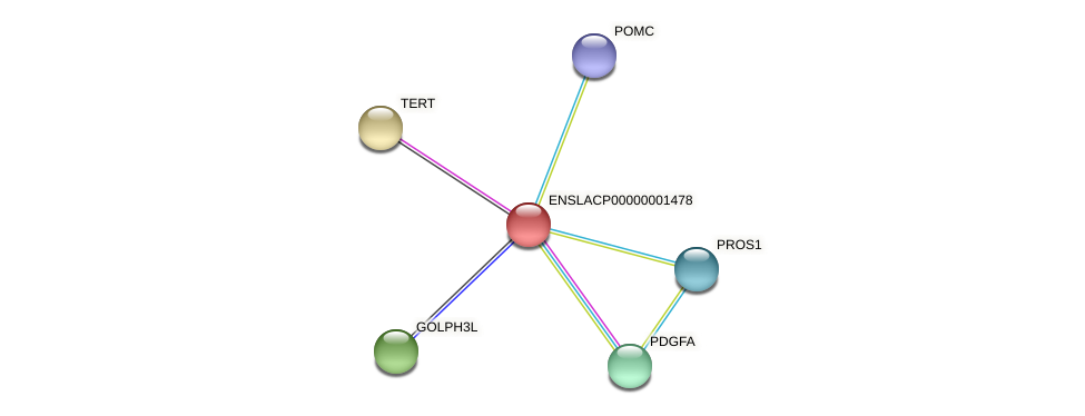 ENSLACG00000001322 protein (Latimeria chalumnae) - STRING interaction network