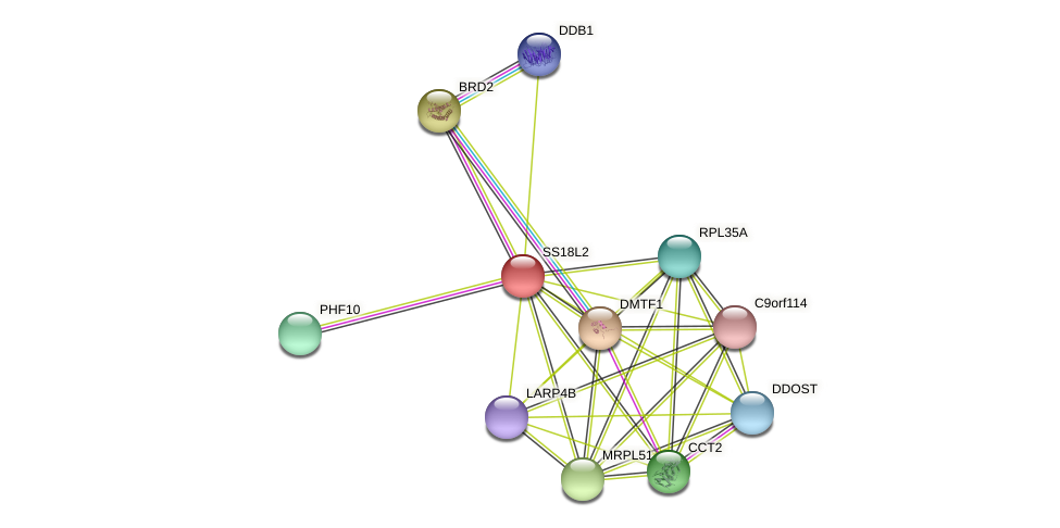 SS18L2 protein (Latimeria chalumnae) - STRING interaction network