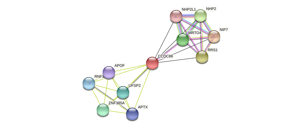 CCDC86 protein (Latimeria chalumnae) - STRING interaction network