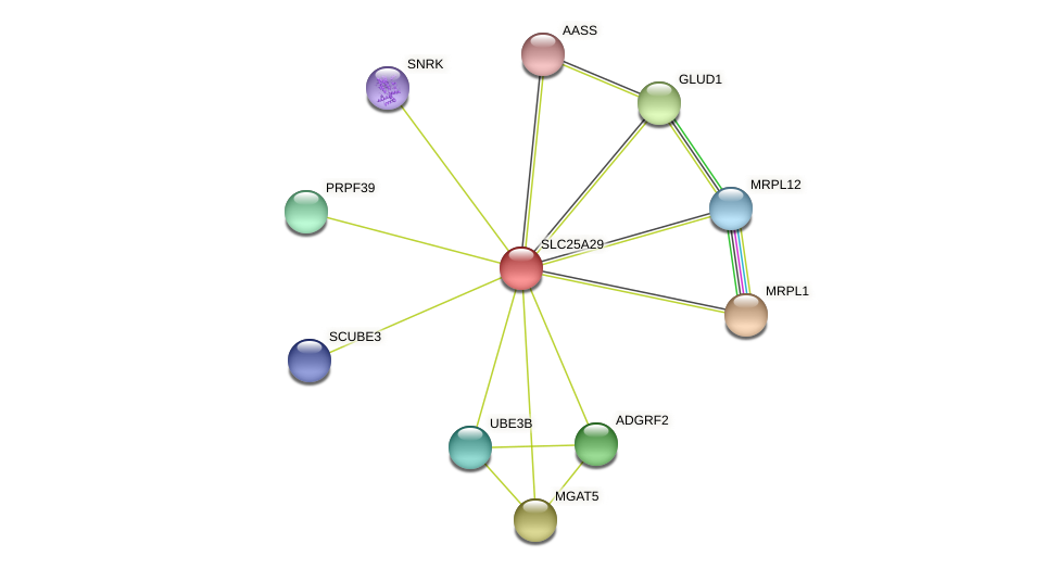 SLC25A29 protein (Latimeria chalumnae) - STRING interaction network