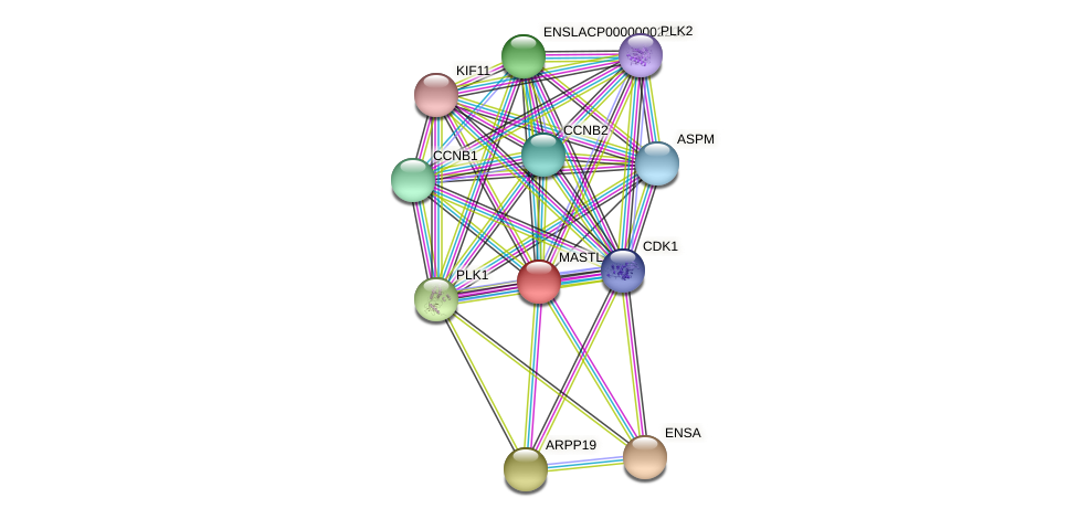 MASTL protein (Latimeria chalumnae) - STRING interaction network