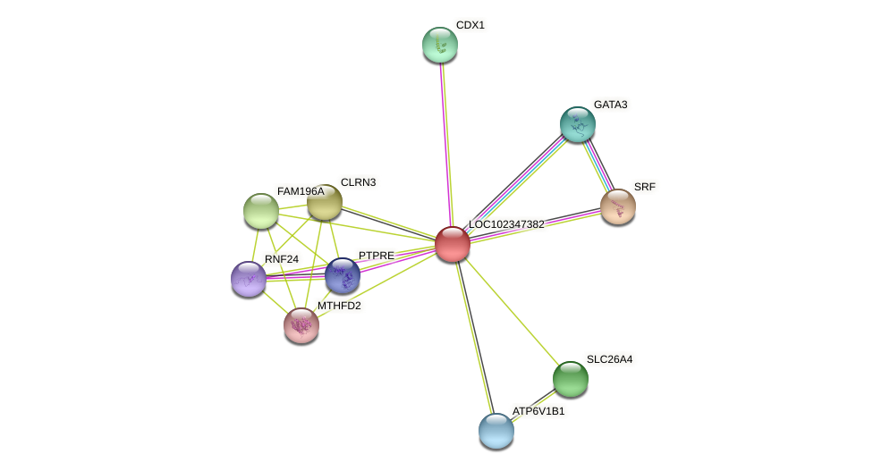 ENSLACG00000001429 protein (Latimeria chalumnae) - STRING interaction network