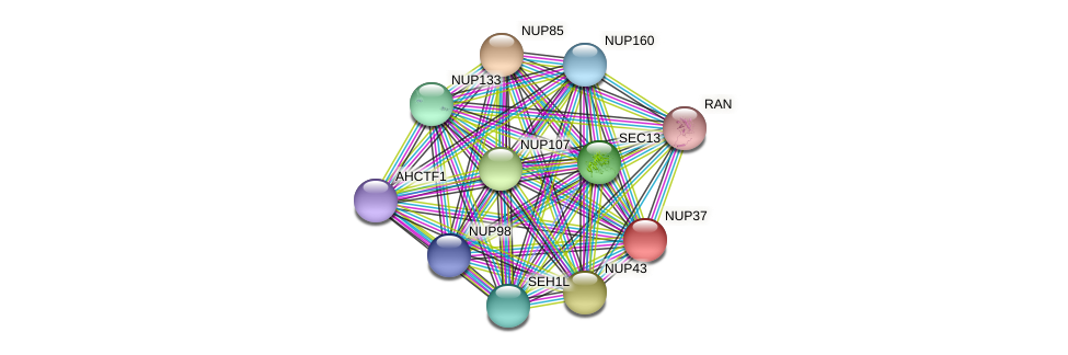 NUP37 protein (Latimeria chalumnae) - STRING interaction network