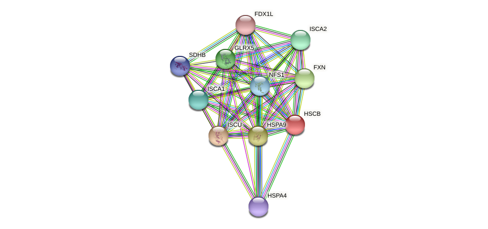 HSCB protein (Latimeria chalumnae) - STRING interaction network
