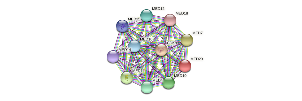 MED23 protein (Latimeria chalumnae) - STRING interaction network
