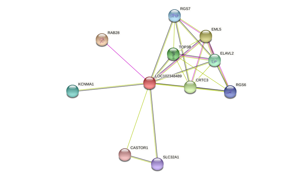 ENSLACG00000001517 protein (Latimeria chalumnae) - STRING interaction network