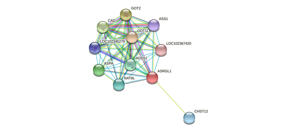 ASRGL1 protein (Latimeria chalumnae) - STRING interaction network