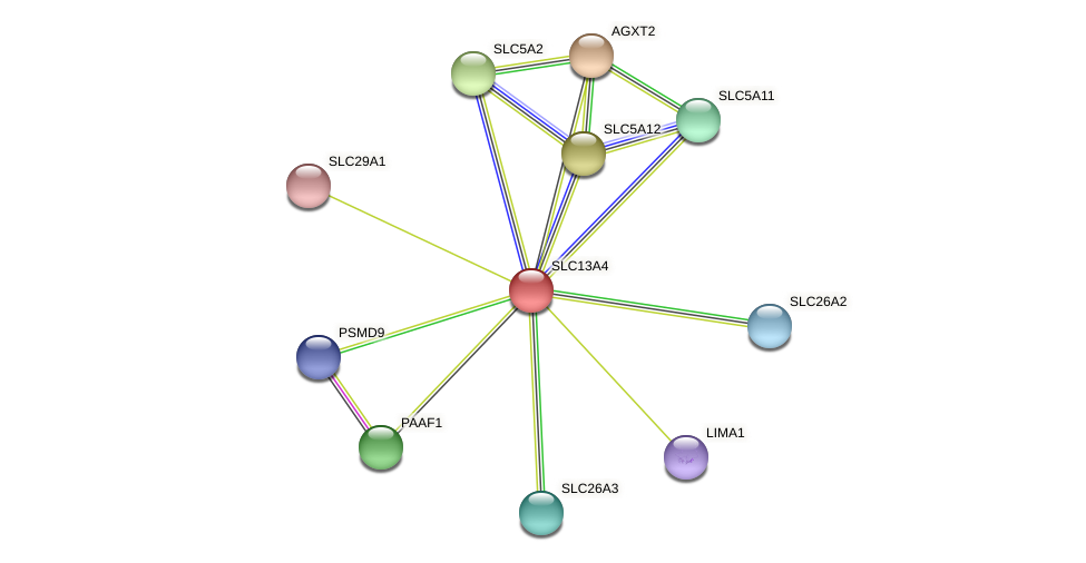 SLC13A4 protein (Latimeria chalumnae) - STRING interaction network