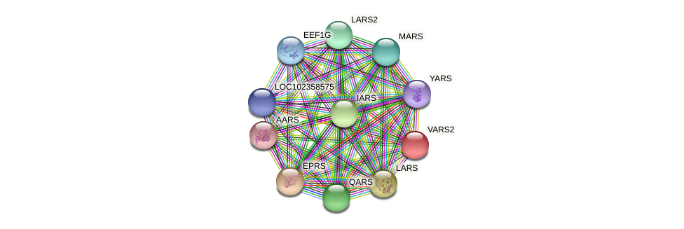 VARS2 protein (Latimeria chalumnae) - STRING interaction network