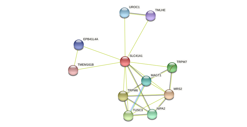 SLC41A1 protein (Latimeria chalumnae) - STRING interaction network