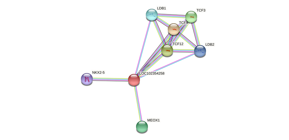 ENSLACG00000001591 protein (Latimeria chalumnae) - STRING interaction network