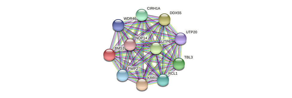 BMS1 protein (Latimeria chalumnae) - STRING interaction network